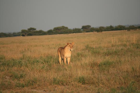 afrika strand und safari
